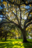 Large oak trees and spanish moss in Forsyth Park, Savannah, Geor Stock Images