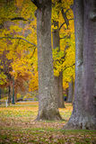 Large Oaks and Maples in Fall Colors. A line of large oak and maple trees displaying Autumn colors in Ritter Park, one of the United States top ten city parks royalty free stock photo