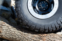 Large offroad tire on tree trunk Stock Photos