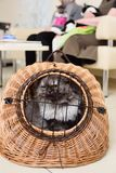 Old beautiful cat sitting in an animal basket against the backdrop of a veterinary clinic. Stock Images
