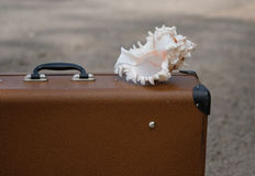 Large old brown suitcase and seashell Stock Photography