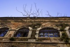 A large old building from which trees grow. An ancient building with windows on which are lattices stock photography
