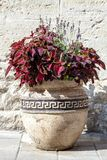 Large old ceramic vase with red coleus plant and lavender. Large old ceramic vase with different flowers near house wall. Big pot with red coleus plant and royalty free stock photo
