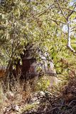 A large old wine barrel. In a thicket of plants stock photography