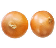 Large onion Stock Photo