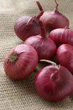 Large onion. Red large onion on sacking Stock Photo