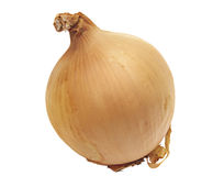 Large onion isolated on white Stock Photography
