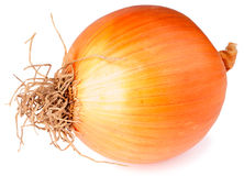 Large onion over white Stock Photos