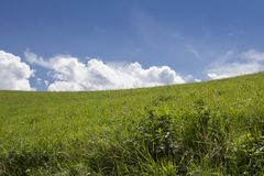 Large open field and clear sky. Photo of a large open field and clear sky Royalty Free Stock Photos