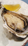 Large open oysters on ice Royalty Free Stock Photos