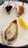 Large open oysters on ice Royalty Free Stock Images