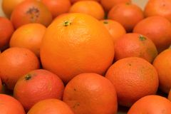 A large orange lies among the small spoiled mandarins. A large fresh orange lies among the small spoiled mandarins Stock Images