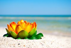 Orange lotus flower with green leaves lies on the sand on a background of blue sea and blue sky summer vacation Stock Photos