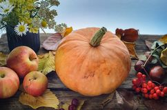 A large orange pumpkin lies on an old wooden table surrounded by ripe apples of autumn leaves and a small bouquet of wild flowers Royalty Free Stock Photo