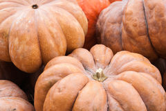 Large orange pumpkins Royalty Free Stock Image