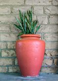 Large orange terra cotta urn with snake plant - Sanseviera trifciata - against a dun brick wall.  royalty free stock photo