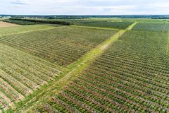 A large orchard, a sunny summer day. View from the top down.  Royalty Free Stock Photography