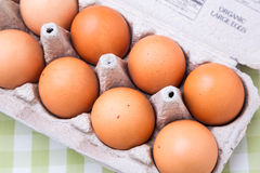 Large organic eggs Royalty Free Stock Image