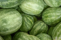 Large Organic Watermelon Royalty Free Stock Photography