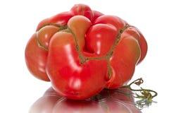 Large original tomato Royalty Free Stock Photo
