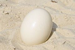 Large ostrich egg. Royalty Free Stock Photos