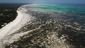 Aerial shot: large outflows on the island of Zanzibar. Large outflows on the island of Zanzibar. seaweed on the beach stock footage