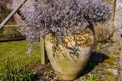 Large oval flower pot with dead blossom. Plant inside; garden in spring with lawn, hollow and decorative elements royalty free stock photos