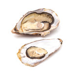 Large oyster. Large raw oyster isolated on a white studio background Royalty Free Stock Photo