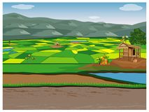Large paddy field. Vector design royalty free illustration