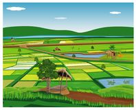 Large paddy field. Vector design stock illustration