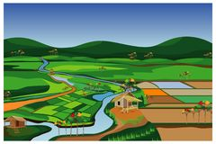 The large paddy field. Vector design royalty free illustration