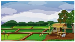 Paddy field vector. Large paddy field vector design royalty free illustration