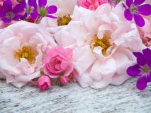 Large pale pink and small bright pink roses and geranium bouquet. On the white rough wooden table Stock Photography