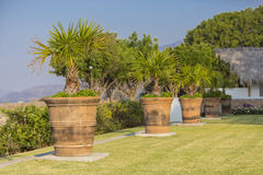 Large pallet pots in the garden Royalty Free Stock Photo
