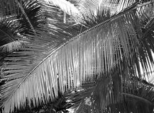 Large Palm Leaf - Abstract Background in Grey Scale Stock Photos