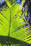 Large palm leaf on background blue sky Royalty Free Stock Photos