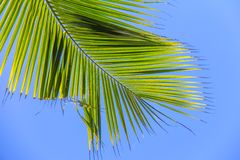 Large palm leaf on background blue sky Stock Image