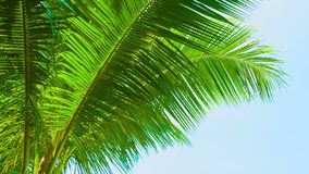 Large palm leaves against the blue sky. Video 1080p - Large palm leaves against the blue sky stock video