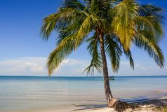 Large Palm on Sand Beach by Sea Boat on Horizon. Large palm with shadow on sand beach by transparent sea distant boat on horizon Stock Photography