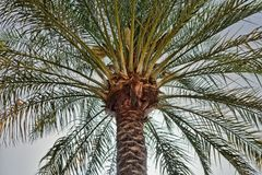 Large palm tree in the back light, photographed on the beach of Aqaba, Jordan Stock Photo