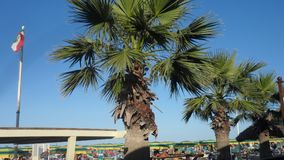 Large palm trees at the beach establishment of Viserbella. A few miles from Rimini, Italy summer beach sea umbrellas playground royalty free stock image