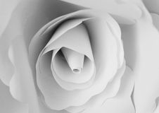 Large Paper Flower. A large white flower made of paper. Decorative flower stock images