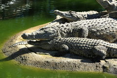 A large park with the crocodiles, Torremolinos, Malaga, Spain Stock Photography