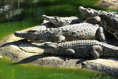 A large park with the crocodiles, Torremolinos, Malaga, Spain Stock Photo
