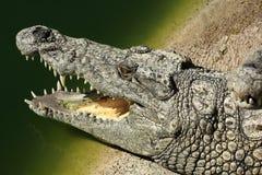 A large park with the crocodiles, Torremolinos, Malaga, Spain Stock Photos
