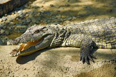 A large park with the crocodiles, Torremolinos, Malaga, Spain Royalty Free Stock Photos
