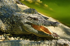 A large park with the crocodiles, Torremolinos, Malaga, Spain Royalty Free Stock Images