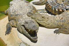 A large park with the crocodiles, Torremolinos, Malaga, Spain. A picture of the large park with the crocodiles, Torremolinos, Malaga, Spain royalty free stock image
