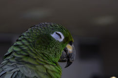 Large parrot close up in the frame Stock Photos
