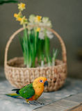 Large parrot with a yellow head Royalty Free Stock Photo